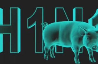 Узнайте о свином гриппе